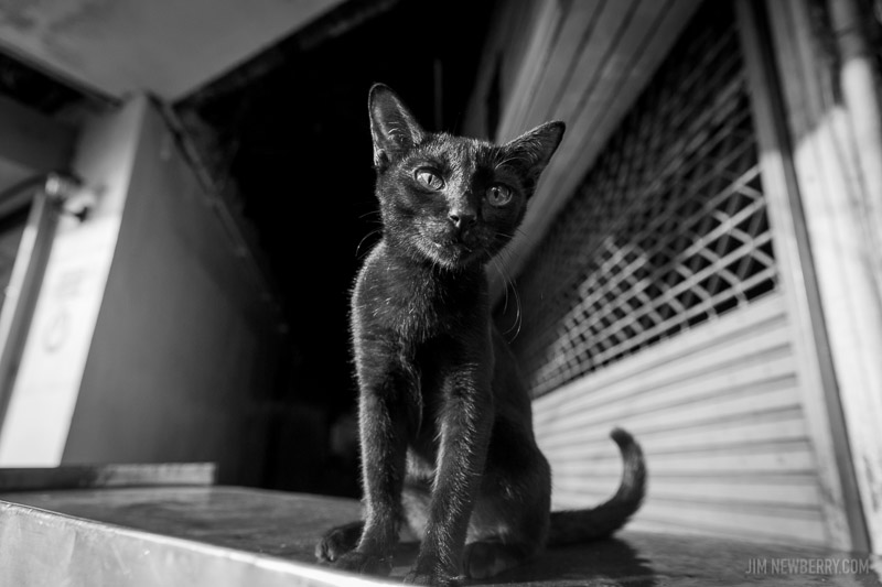 Black cat in Bangkok, photo by Jim Newberry.
