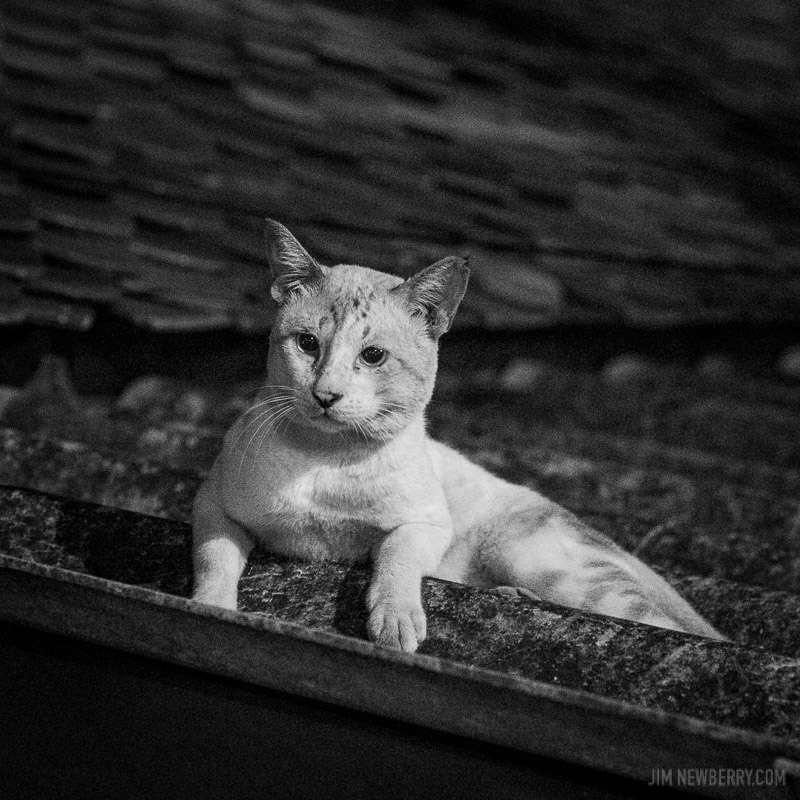 Cat on a roof in Bangkok, Thailand. Photo by Jim Newberry.