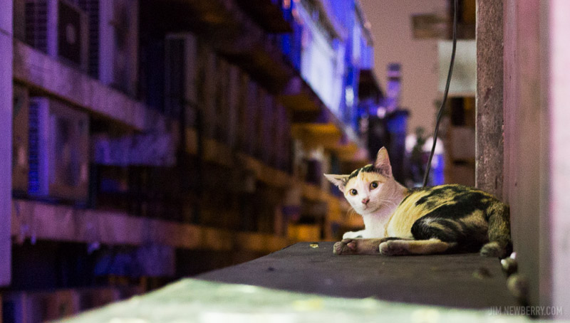 Stray cat in Bangkok, Thailand. Photo by Jim Newberry.